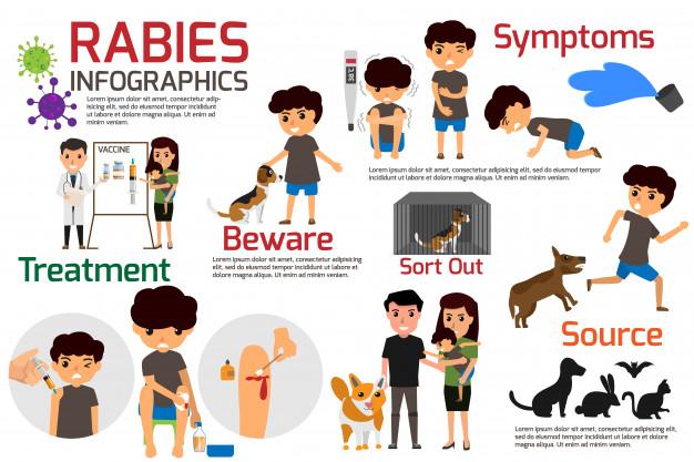 Rabies infographics