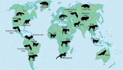 rabies vectors global distribution
